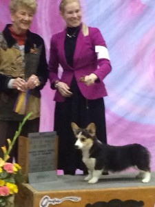 Intl CH Cook Arena Shes A Pistol - Best of Breed - AKC Starkville MS