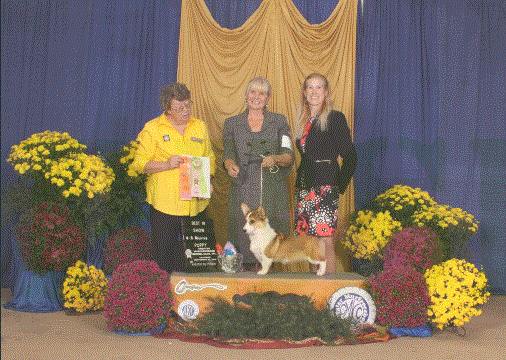 "BEST IN SHOW! Sept 2014 - Murfreesboro, TN - AKC ""A"" Rated Puppy Match. First out of 41 entries! Shown by my mom, Lynn Banks."