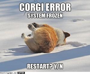 Funny Corgi Pictures