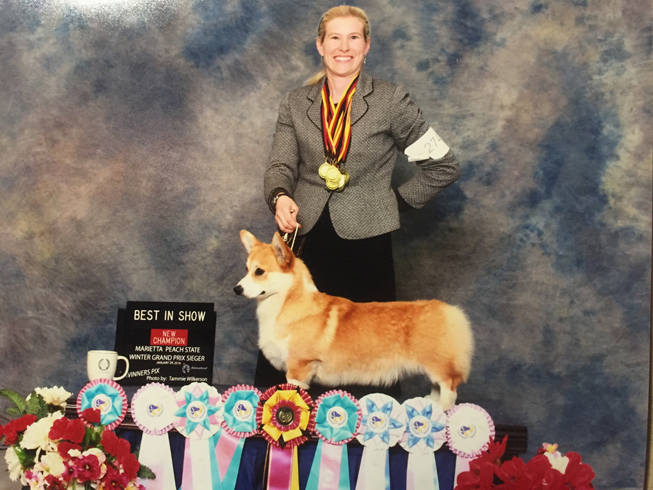 AKC Champion Stud Dog